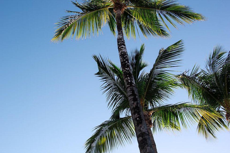 palms-puerto-rico-tobiassikstrom.jpg