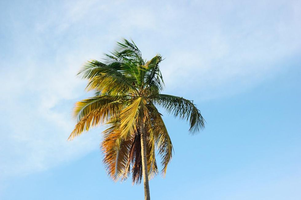 palms-puertorico.jpg