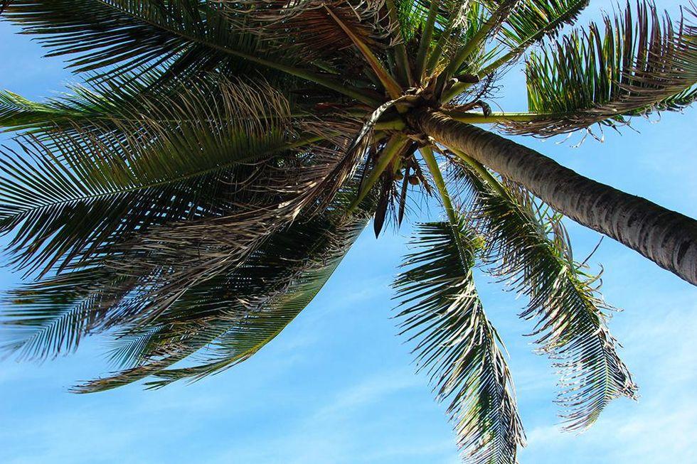 tobias_sikstrom_palms_puerto_rico.jpg