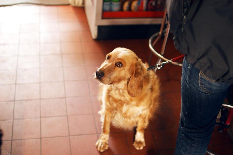 hund il cafe kungsholmen.jpg